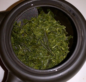 Sencha Overture wet leaves