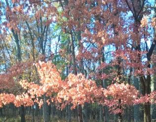 autumn_leaves_1