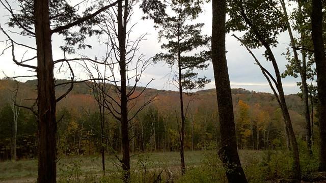 autumn_leaves_19