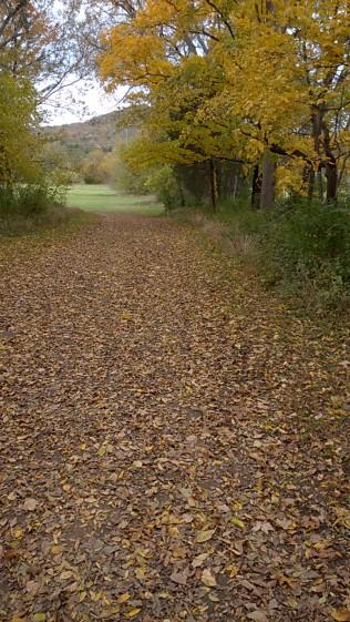 autumn_leaves_20