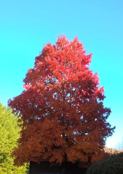 autumn_leaves_3