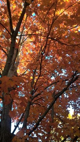 autumn_leaves_5